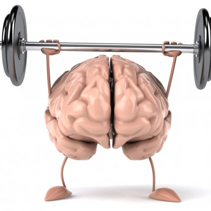 Image result for creatine brain