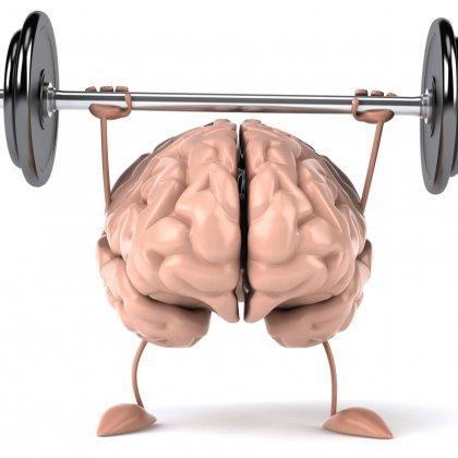Image result for creatine brain